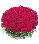 Bunch of 150 Red Roses